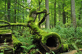 History of the forest in Central Europe - Białowieża Forest, Poland
