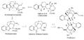 Biosíntesis de la toxiferina.png