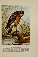 Bird-life (Plate XIV) BHL7855762.jpg