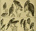 Bird lore (1921) (20195786268).jpg