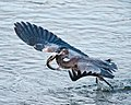 Birds (17110006414).jpg