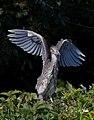 Birds (17115740483).jpg