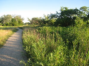 Jackson Park (Chicago) - One of Jackson Park's bird trails.