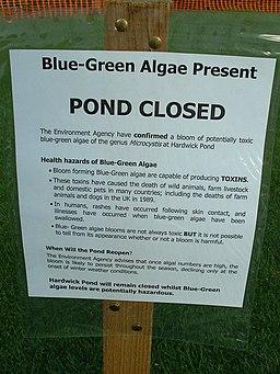Blue-Green Algae Present - geograph.org.uk - 1312505