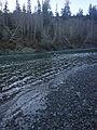 Bogachiel River.JPG