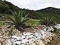 Bordo en los valles de Nochixtlán, Oaxaca..jpg