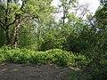 Boscaglia presso il bivio della Crocina - panoramio.jpg