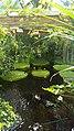 Botanisk hage.jpg