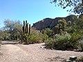 Boyce Thompson Arboretum, Superior, Arizona - panoramio (4).jpg