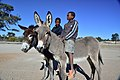 Boys on donkeys, Andriesvale, Kalahari, Northern Cape, South Africa (19918240033).jpg