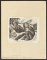 Bradypus tridactylus - 1700-1880 - Print - Iconographia Zoologica - Special Collections University of Amsterdam - UBA01 IZ21000159.tif