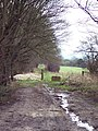 Bridleway from the Old Shaston Drove to Bishopstone - geograph.org.uk - 318334.jpg