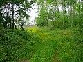 Bridleway through Tin Hill Wood - geograph.org.uk - 1355407.jpg
