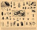 Brockhaus and Efron Encyclopedic Dictionary b22 898-0.jpg