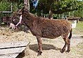 Brown donkey.jpg
