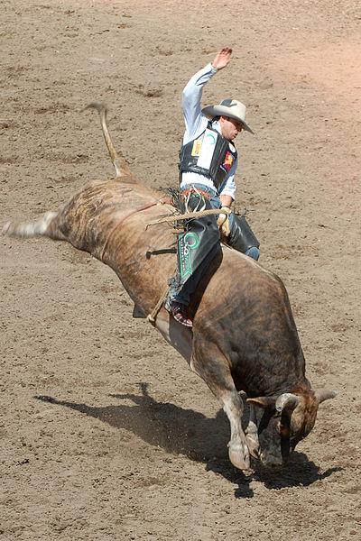 V niektorých krajinách je obľúbené rodeo - jazdenie na divokých zvieratách (býkoch a koňoch)