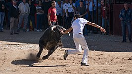 Bullfighting Cuts (139308955).jpeg