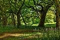 Burton Bushes IMG 1519.jpg - panoramio.jpg
