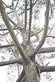 Cabang pohon.jpg