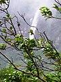 Cachoeira do Morro Branco.JPG