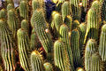 Cactus (8313247242).jpg