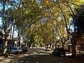 Calle Jorge Newbery.jpg