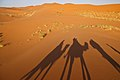 Camel Shadows (4803940181).jpg