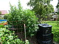 Cannabis sativa plant (12).jpg