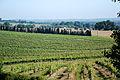 Cannet (Gers) Vignes de l'AOC Béarn.JPG