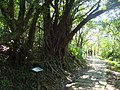 Caoling Historic Trail 草嶺古道 - panoramio (1).jpg