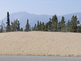 Carcross Desert 2009 6.jpg