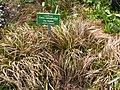 Carex-caryophyllea.jpg