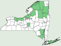 Carex exilis NY-dist-map.png