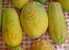Carica papaya dsc07806.jpg