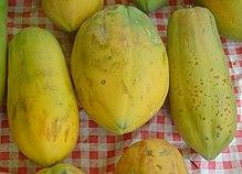 Mam�o (Carica papaya)