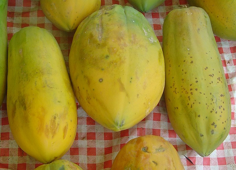 File:Carica papaya dsc07806.jpg