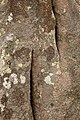 Carnac Stone Texture - HDR (11956549144).jpg