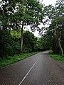 Carretera Vía Hacia la Cueva del Guacharo Caripe.jpg