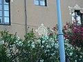 Casa Artigas P1490541.jpg