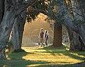 Centennial Park light 003a.jpg