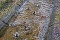 Central childrens park (park Horkaha, Minsk) p07 — ducks.jpg