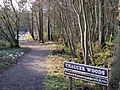 Chaucer Woods - geograph.org.uk - 1151705.jpg