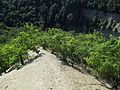 Chestnut Oak Zoar Valley Knife Edge Ridge.jpg