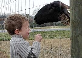 Mouton et bien-être dans MOUTON 270px-Child_and_ewe
