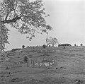 Chinese begraafplaats in Malakka, Bestanddeelnr 255-6671.jpg