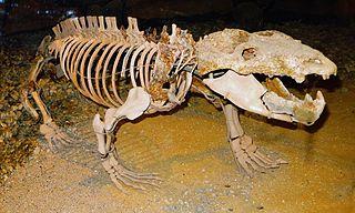 <i>Chiniquodon</i> genus of mammals (fossil)