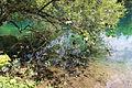 Christlessee 11072015 (Foto Hilarmont) (4).jpg