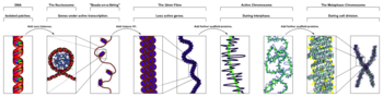 Chromatin Structures.png