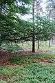 Cirkels in het bos (36504417385).jpg