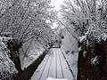 Clifton Down Tracks (snow).jpg
